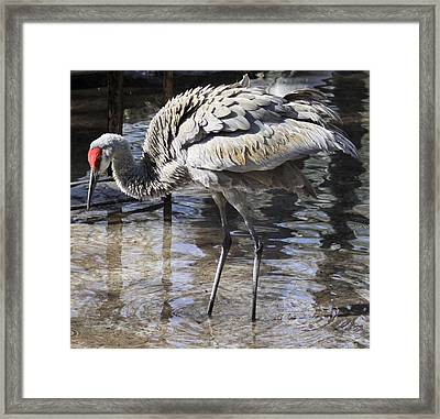 The Red Head Framed Print by Philip Bracco