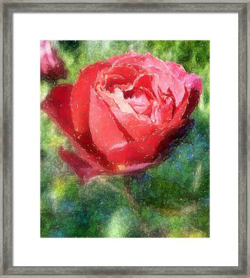 The Red Rose Framed Print by Carol Grimes
