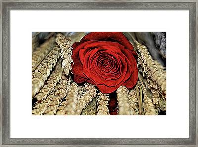 Framed Print featuring the photograph The Red Rose On A Bed Of Wheat by Diana Mary Sharpton