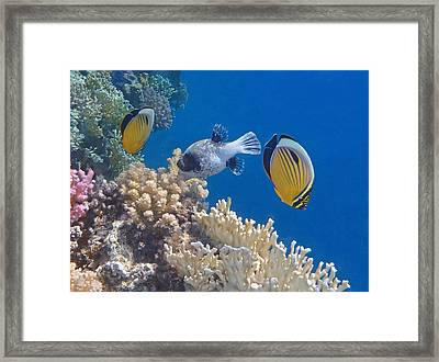 The Red Sea Underwater World Framed Print