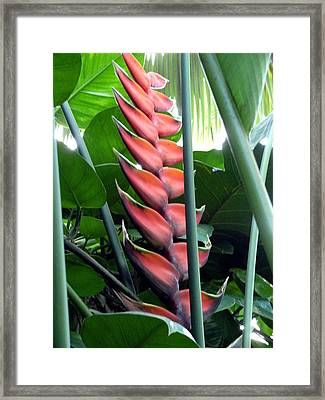 The Red Stairs Framed Print by Mindy Newman