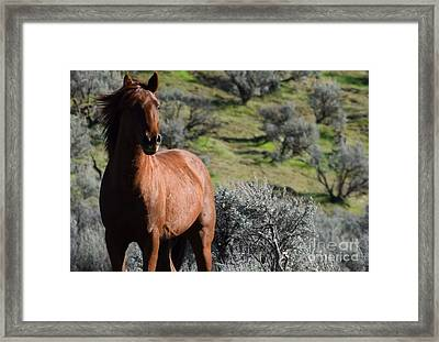 The Red Stallion Framed Print by LKB Art and Photography