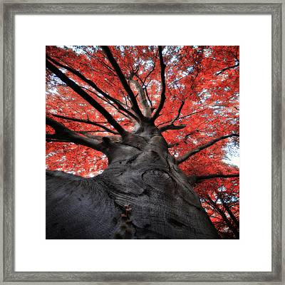 The Red Tree Framed Print by Philippe Sainte-Laudy Photography
