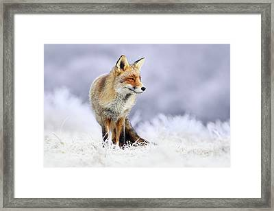 The Red, White And Blue _ Red Fox In The Winter Framed Print by Roeselien Raimond