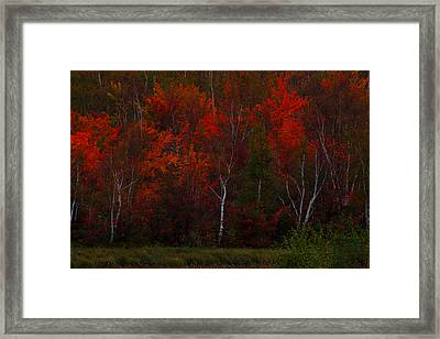 The Reds Have It Framed Print