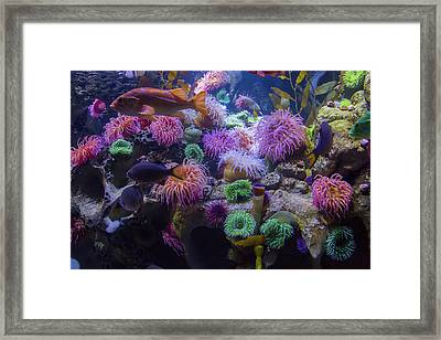 The Reef Framed Print