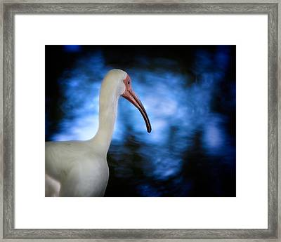 The Reflecting Pond Framed Print by Mark Andrew Thomas