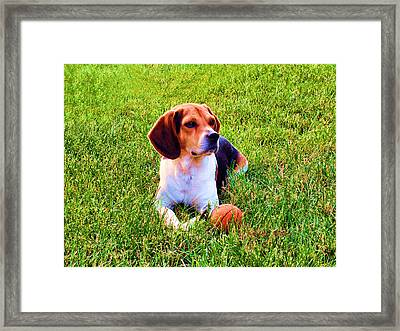 The Reserved Beagle Framed Print