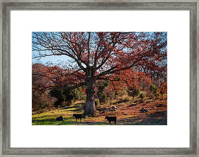 The Resting Tree Framed Print by Karen Wiles