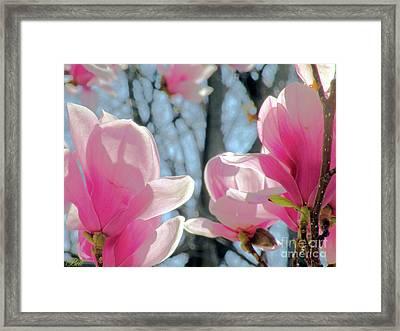 The Return Of Spring Framed Print by Christine Belt