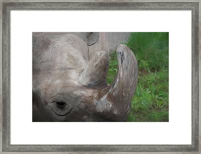 The Rhino Framed Print