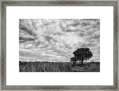 The Right Tree II Framed Print