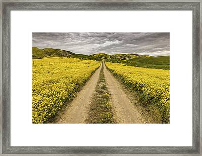 Framed Print featuring the photograph The Road Less Pollenated by Peter Tellone