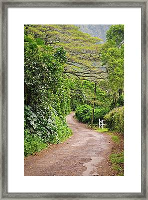 The Road Less Traveled-waipio Valley Hawaii Framed Print