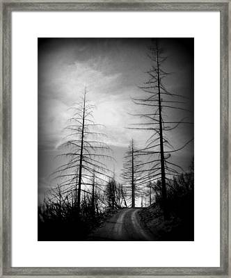 The Road Not Taken    Up On Hwy 2509 Framed Print by Marie Neder
