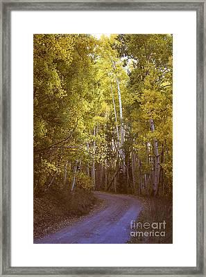 The Road Taken  Framed Print