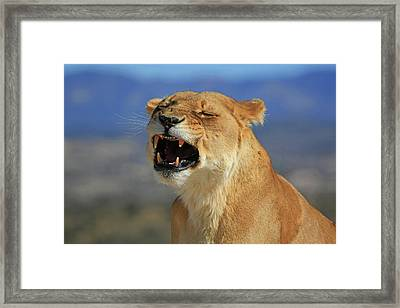 The Roar Framed Print by Donna Kennedy