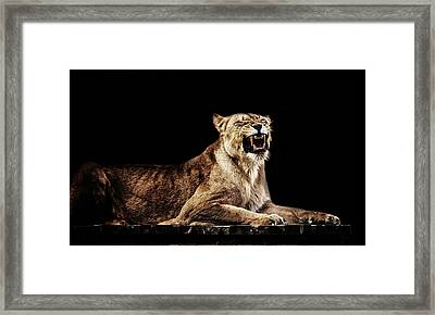 The Roar Framed Print