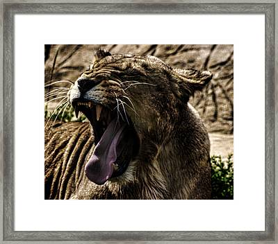 The Roaring Lion Framed Print by Martin Newman
