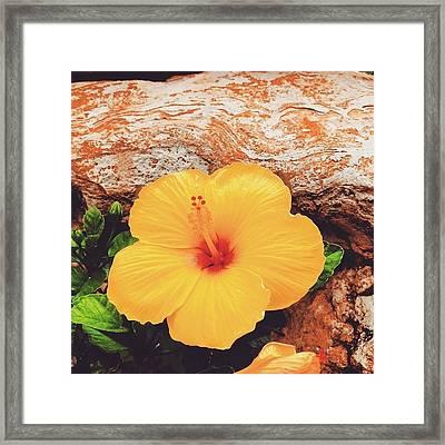Hybiscus Framed Print