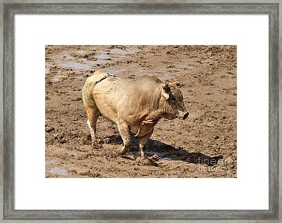 The Rodeo Bull Framed Print by Louise Heusinkveld