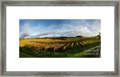 The Rolling Vineyards Of Napa  Framed Print