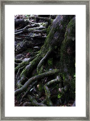 The Root Framed Print by Pramod Bansode