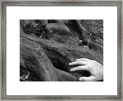 The Roots Framed Print by Daniel Csoka