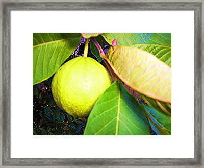 The Rose Apple Framed Print