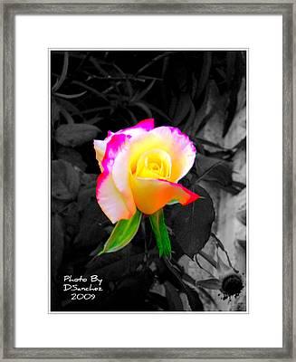 The Rose Framed Print by Doug Sanchez