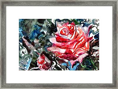 The Rose Framed Print by Mindy Newman