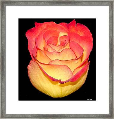 Framed Print featuring the photograph The Rose by Rick Friedle