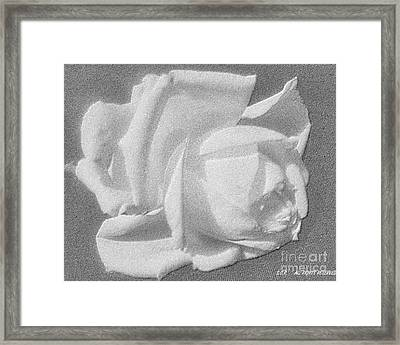 The Rose Framed Print by Saribelle Rodriguez
