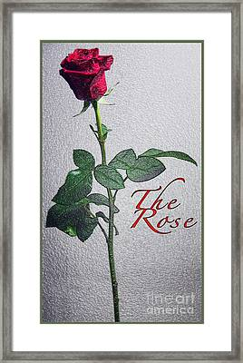 The Rose Framed Print by Terry Wallace