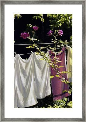 The Rose Towel Framed Print