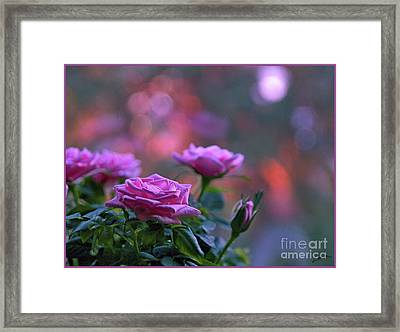 Framed Print featuring the photograph The Roses by Lance Sheridan-Peel