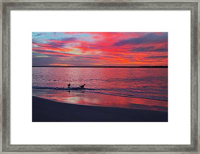 The Royals Of Topsail Framed Print