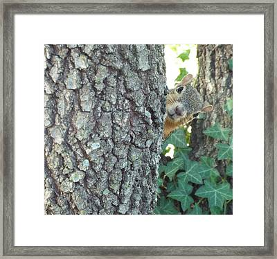 The Runaround Framed Print by Michael Dillon