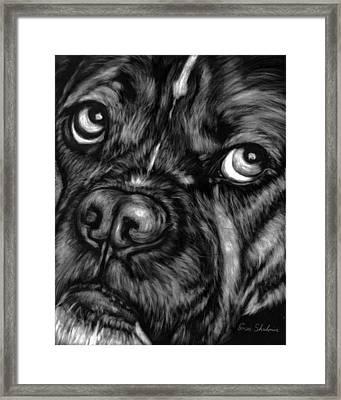 The Sad Boxer Framed Print by Enzie Shahmiri