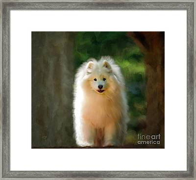 The Samoyed Smile Framed Print by Lois Bryan