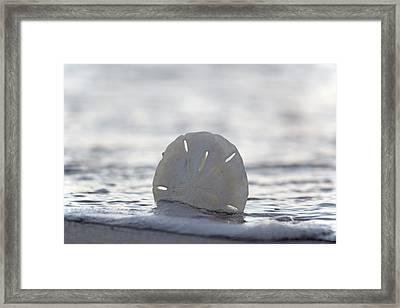 The Sand Dollar Framed Print