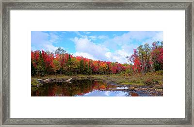 The Scarlet Reds Of Autumn Framed Print by David Patterson