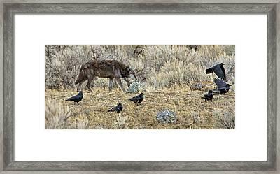 The Scavengers Framed Print by Sandy Sisti