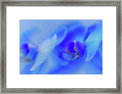 The Scent Of Blue Mystique Framed Print