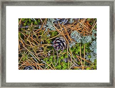 The Scent Of Pine Forest Framed Print