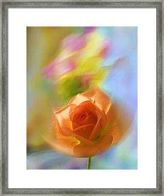 Framed Print featuring the photograph The Scent Of Roses by Vladimir Kholostykh