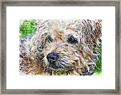 The Scruffiest Dog In The World Framed Print by Meirion Matthias
