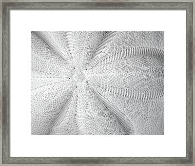 The Sea Biscuit Framed Print by JC Findley