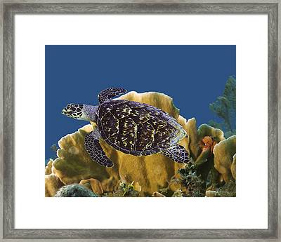 Framed Print featuring the photograph The Sea Turtle by Paula Porterfield-Izzo