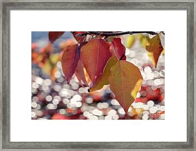The Season Of The Fall Begins Framed Print